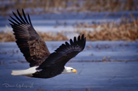 Eagle flight 3